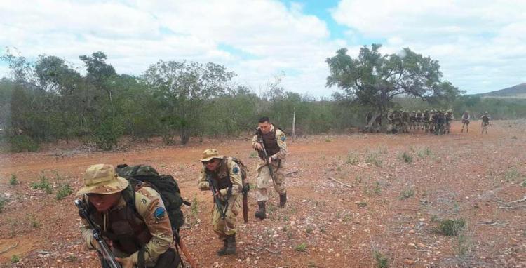 Com auxílio de drone, polícia encontra plantação com 200 mil pés de maconha